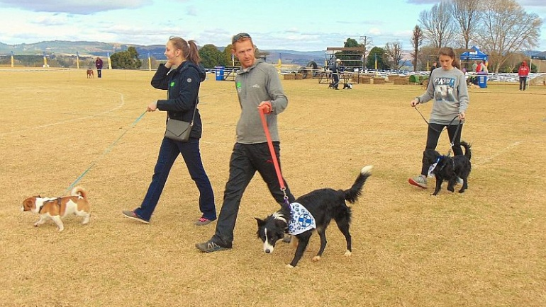 Update on the Hill's 1000 Paws Walk for SPCAs