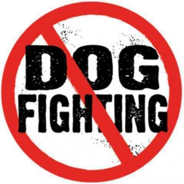 Dog fighting punishment